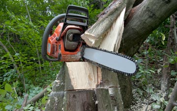 diy tree surgery dangers