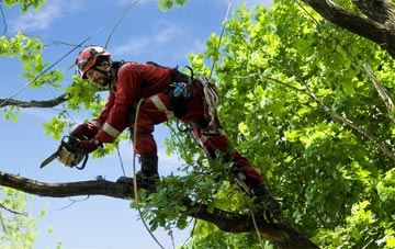 find trusted rated England tree surgeons