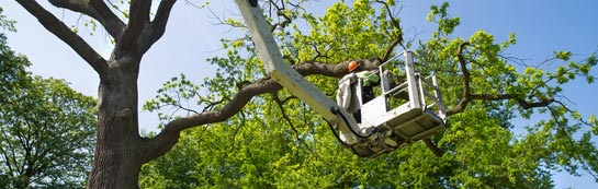 England tree surgery services