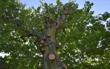 what is England tree surgery?